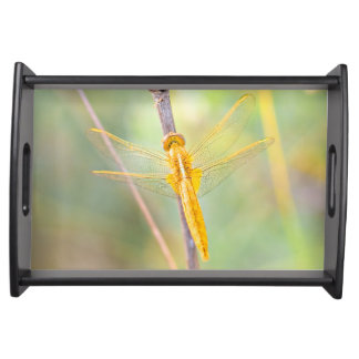 Golden and yellow dragonfly serving platter