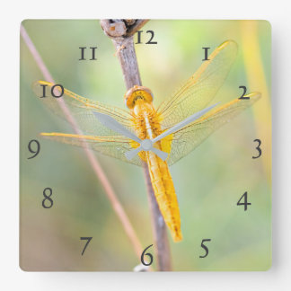 Golden and Yellow Dragonfly Square Wall Clock