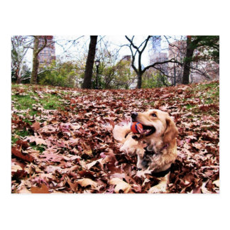 """Golden Autumn"" in Central Park Postcards"