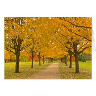 """""""Golden Autumn"""" (photog.) Greeting Card"""
