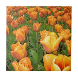 Golden bed of tulips, Keukenhof Tile