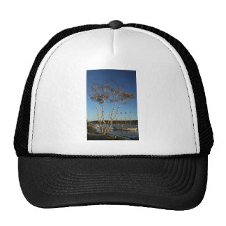Golden Birch with ship Cap
