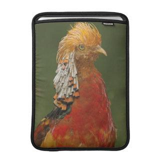"Golden/Chinese Pheasant  Macbook 13"" Sleeve"