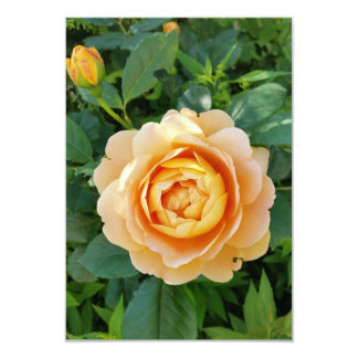 Golden colored rose card