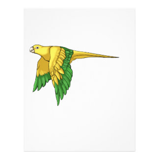 Golden Conure Products Custom Flyer