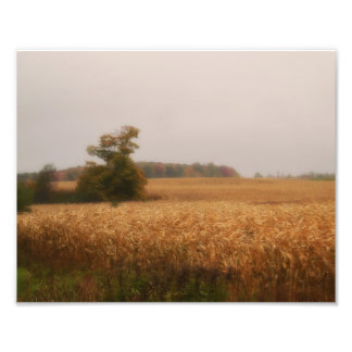Golden Corn Field in Autumn by Shawna Mac Art Photo