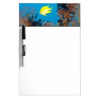 Golden Damselfish (Amblyglyphidodon aureus) Dry Erase Board