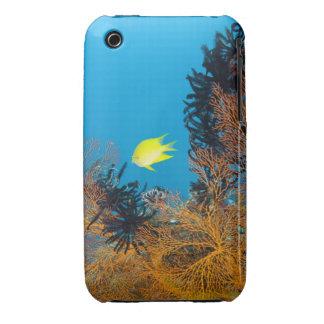 Golden Damselfish (Amblyglyphidodon aureus) iPhone 3 Case-Mate Case
