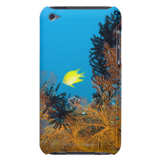 Golden Damselfish (Amblyglyphidodon aureus) iPod Case-Mate Case