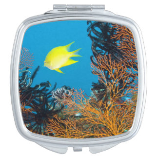 Golden Damselfish (Amblyglyphidodon aureus) Makeup Mirrors