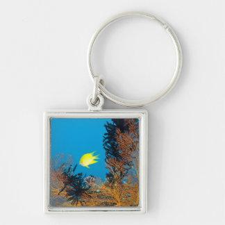 Golden Damselfish (Amblyglyphidodon aureus) Silver-Colored Square Key Ring
