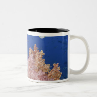 Golden Damselfish (Amblyglyphidodon aureus), Two-Tone Coffee Mug