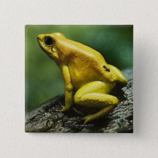 Golden Dart Frog 15 Cm Square Badge