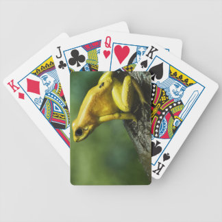 Golden Dart Frog Bicycle Playing Cards