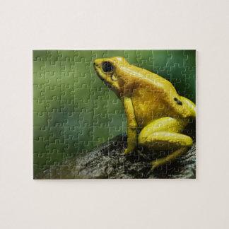 Golden Dart Frog Jigsaw Puzzle