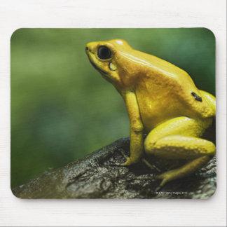 Golden Dart Frog Mouse Mat