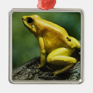 Golden Dart Frog Silver-Colored Square Decoration