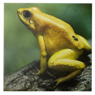 Golden Dart Frog Tile