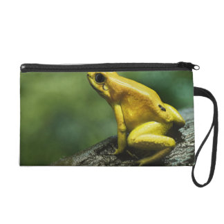 Golden Dart Frog Wristlet