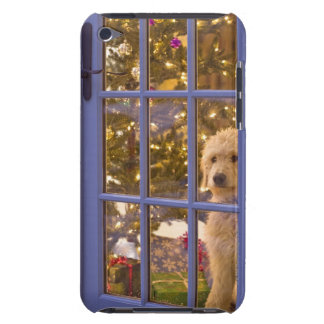 Golden Doodle puppy looking out glass door with Barely There iPod Cases