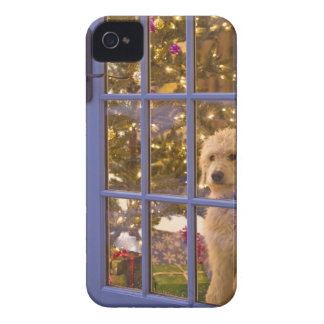 Golden Doodle puppy looking out glass door with Case-Mate iPhone 4 Cases