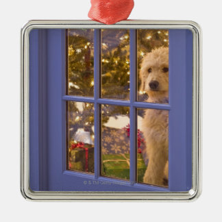Golden Doodle puppy looking out glass door with Silver-Colored Square Decoration