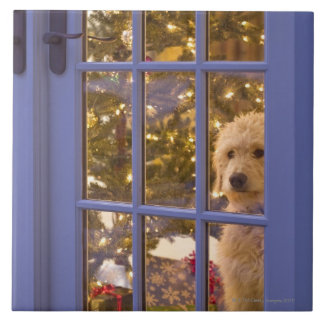 Golden Doodle puppy looking out glass door with Tile