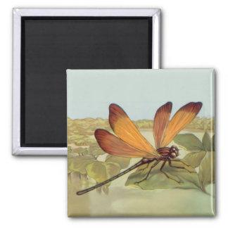 Golden Dragonfly Square Magnet