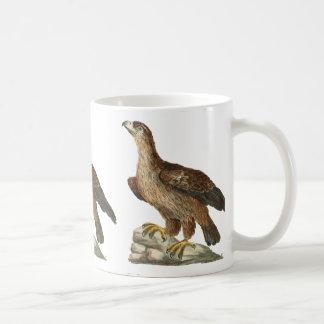 Golden Eagle - Aquila chrysaetos Mugs