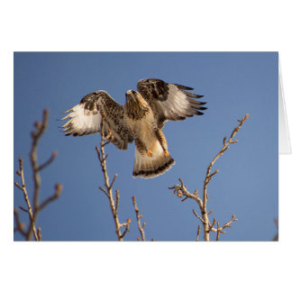 Golden eagle hunting for mice card