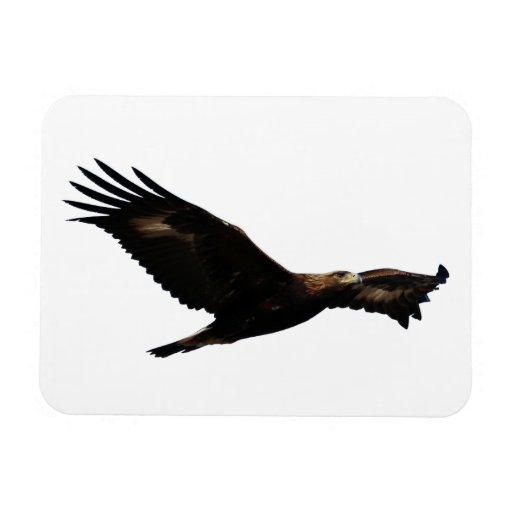 Golden Eagle Vinyl Magnets