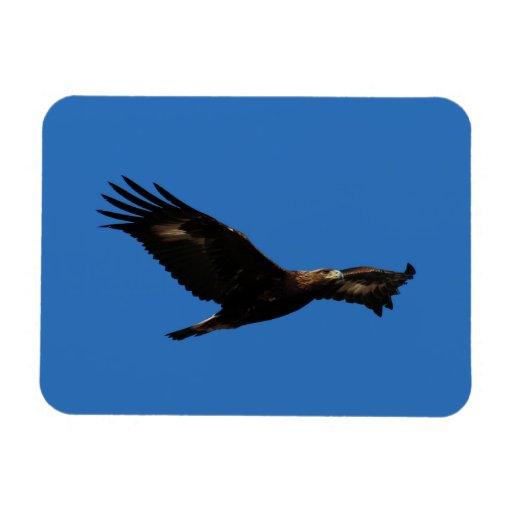 Golden Eagle Magnets