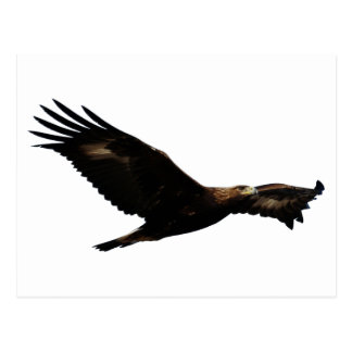 Golden Eagle Soaring Postcard
