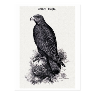 """Golden Eagle"" Vintage Illustration Postcard"