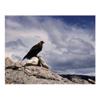 Golden Eagle Wildlife Series # 14 Postcard