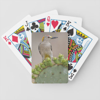 Golden-fronted Woodpecker adult male perched Bicycle Playing Cards