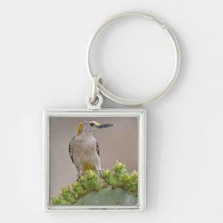 Golden-fronted Woodpecker adult male perched Key Chain