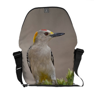 Golden-fronted Woodpecker adult male perched Messenger Bags