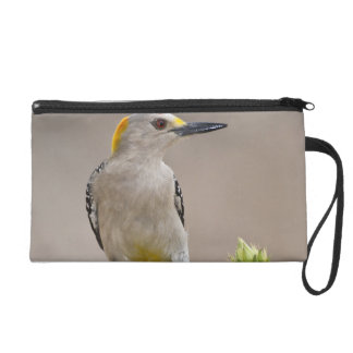 Golden-fronted Woodpecker adult male perched Wristlet