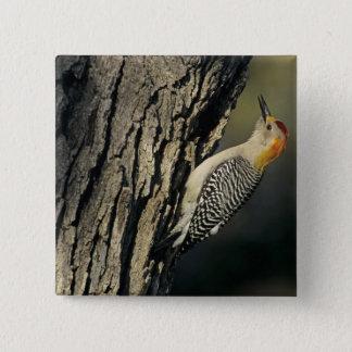 Golden-fronted Woodpecker, Melanerpes 15 Cm Square Badge