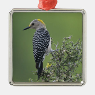 Golden-fronted Woodpecker, Melanerpes 2 Christmas Ornament