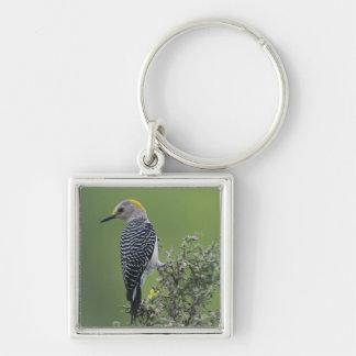 Golden-fronted Woodpecker, Melanerpes 2 Key Ring
