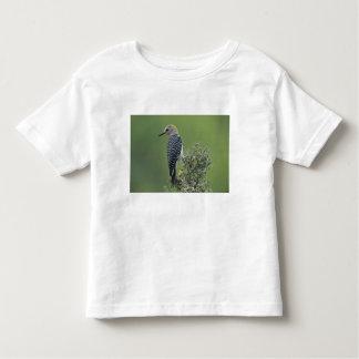 Golden-fronted Woodpecker, Melanerpes 2 Toddler T-Shirt