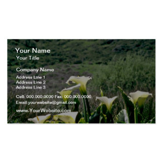 Golden Gate Nat'l Recreation Area - Calla Lilies P Pack Of Standard Business Cards