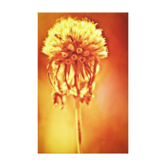 Golden Glow foral print Gallery Wrapped Canvas