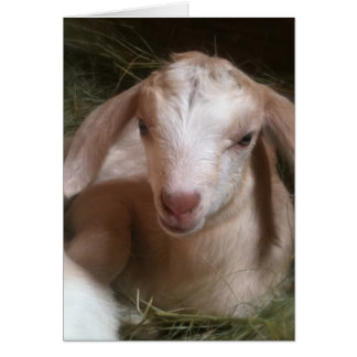 Golden goat kid greeting card