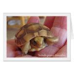 Golden Greek Tortoise Photo Card
