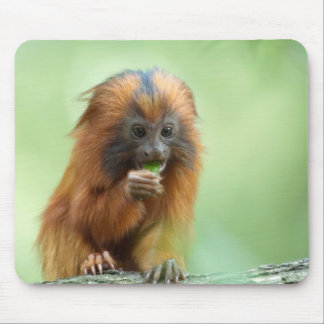 Golden Head Youngster Mouse Mat