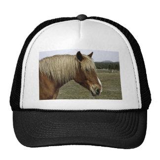 Golden horse cap