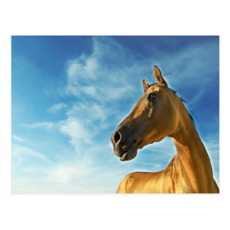 golden horse of Turkmenistan Postcard